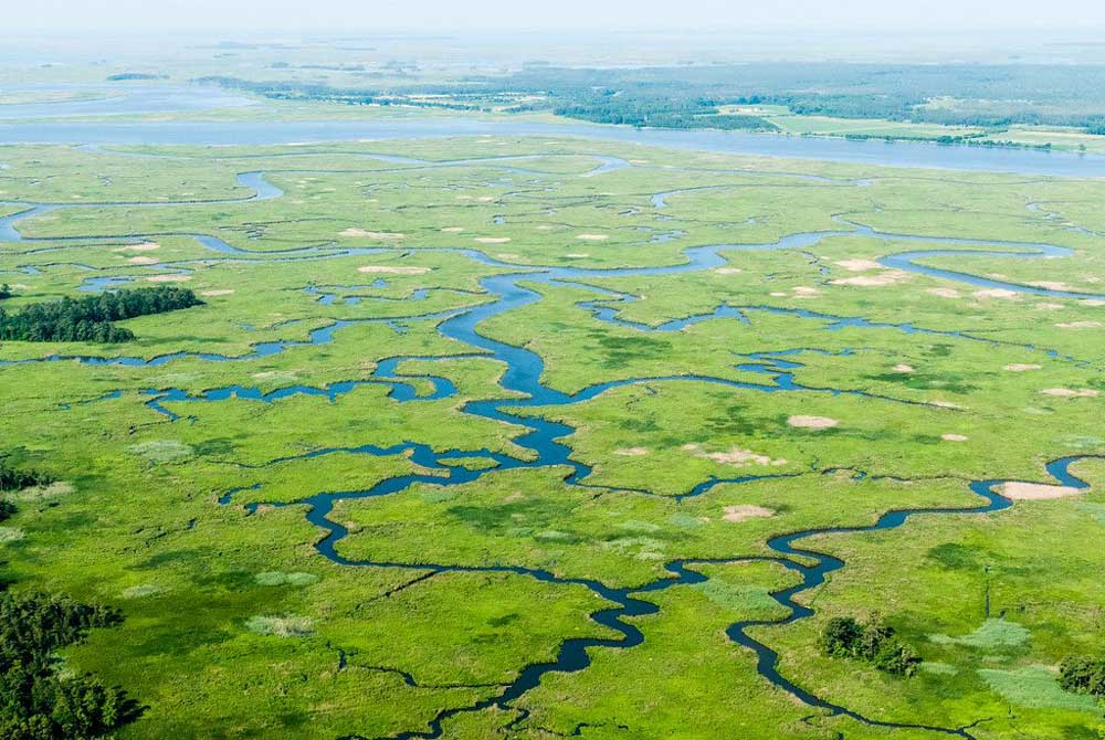 Aerial image of blue tributaries through green marshland