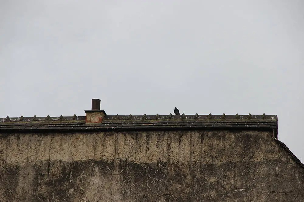 A photo of a pigeon sitting on the ledge of a building set against a cloudy background.