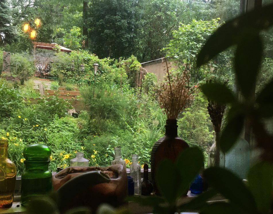Succulents in dark foreground. View of a backyard garden through window.