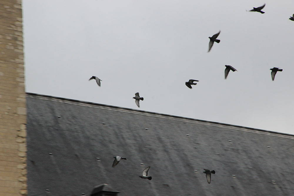 A photo of pigeons taking flight from the roof of an old building.