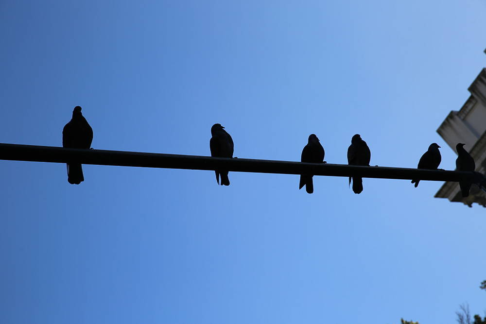 a row of pigeons sitting on a telephone wire photographed from below