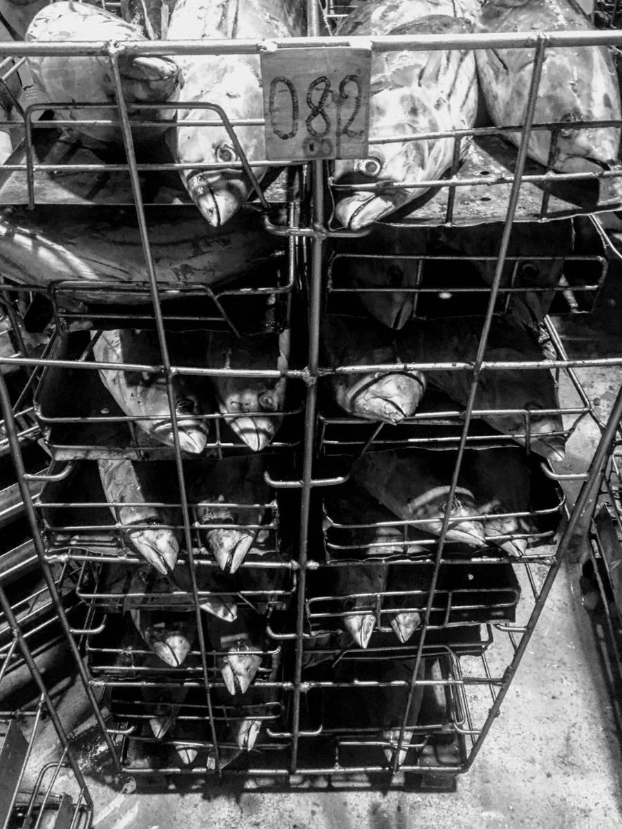 Black-and white tuna fish layered on racks