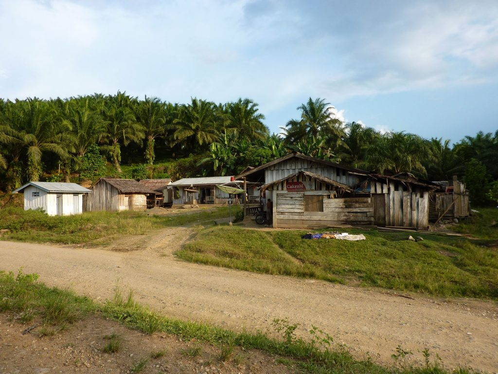 A cluster of wooden houses with a dirt road and palm trees