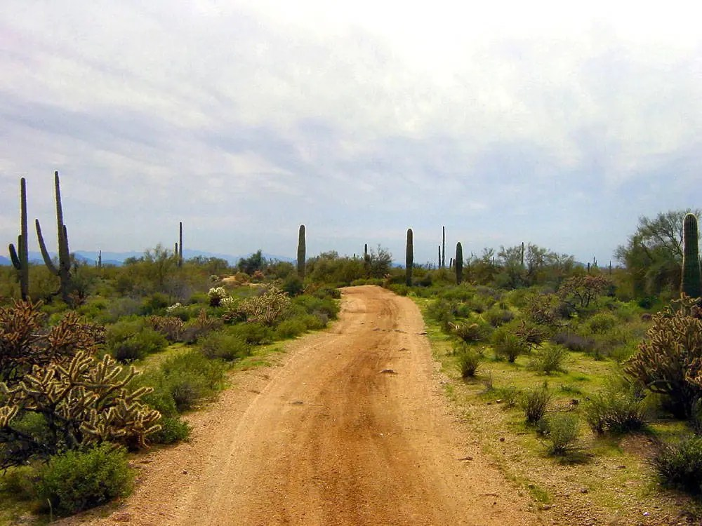 A dirt road cuts through the center of this photo, with lush desert cacti and brush growing at its edges.