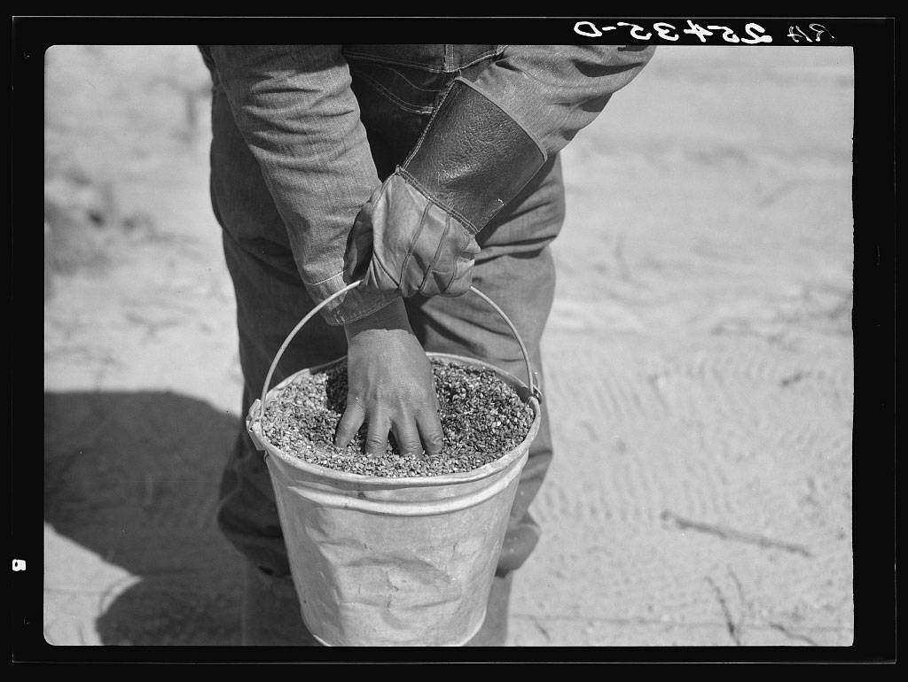Photograph of person with hands in a pail of seeds.