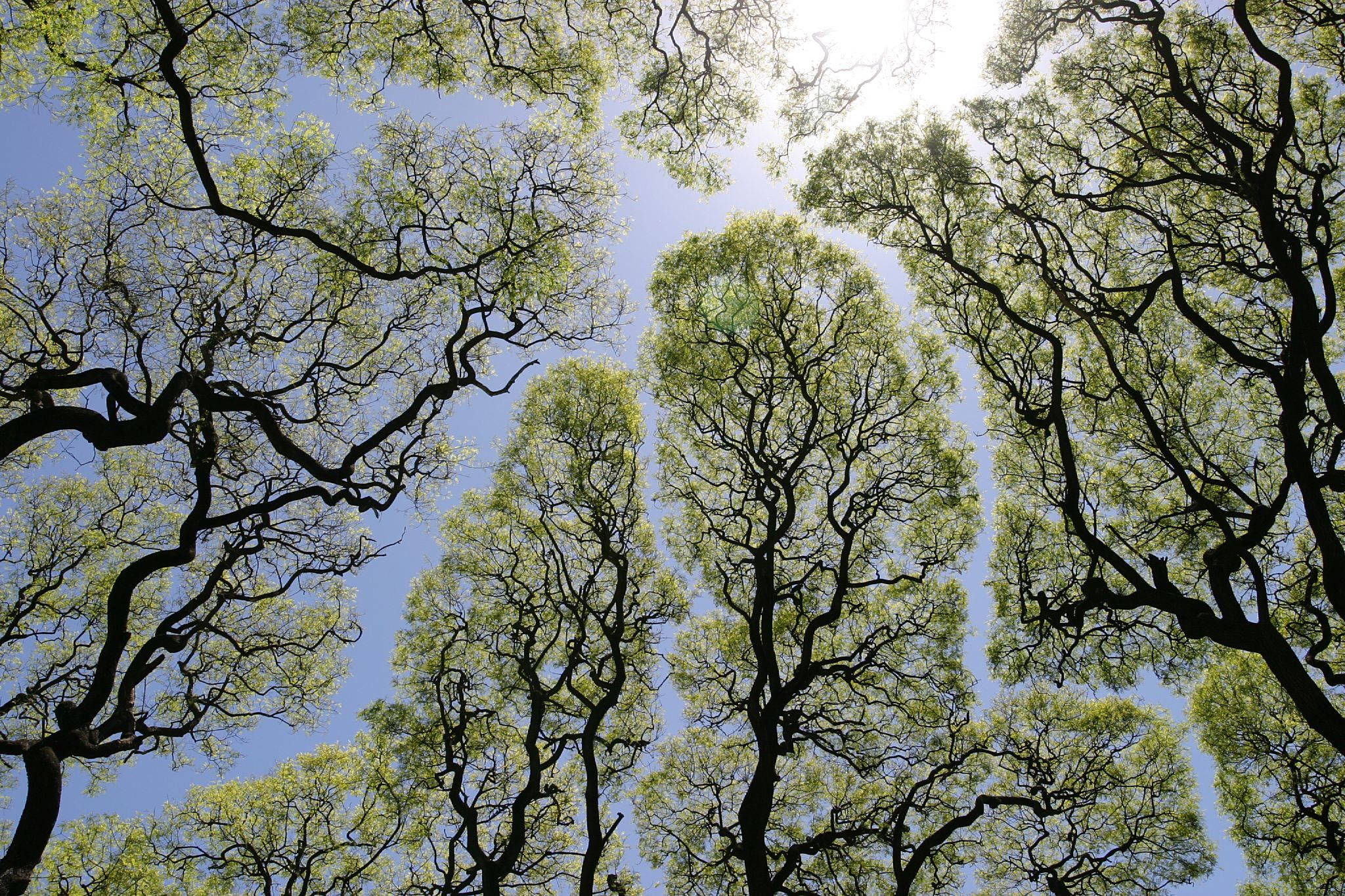 Several trees nestle in the space canopy together with distances between their leaves