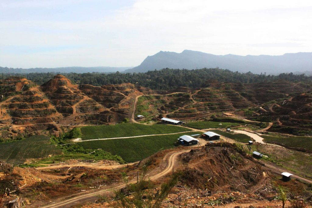 Distanced view of terraced hills of palm oil plantation