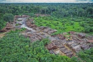 Two bulldozers surrounded by piles of cut trees with rain forest in background