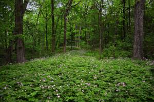 dense woods with vegetation and flowers on the ground