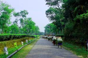 People carrying packs on their backs walk on a paved road through a tea planation.