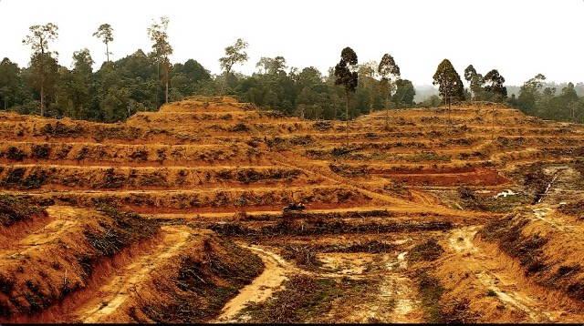 Empty brown hills after deforestation