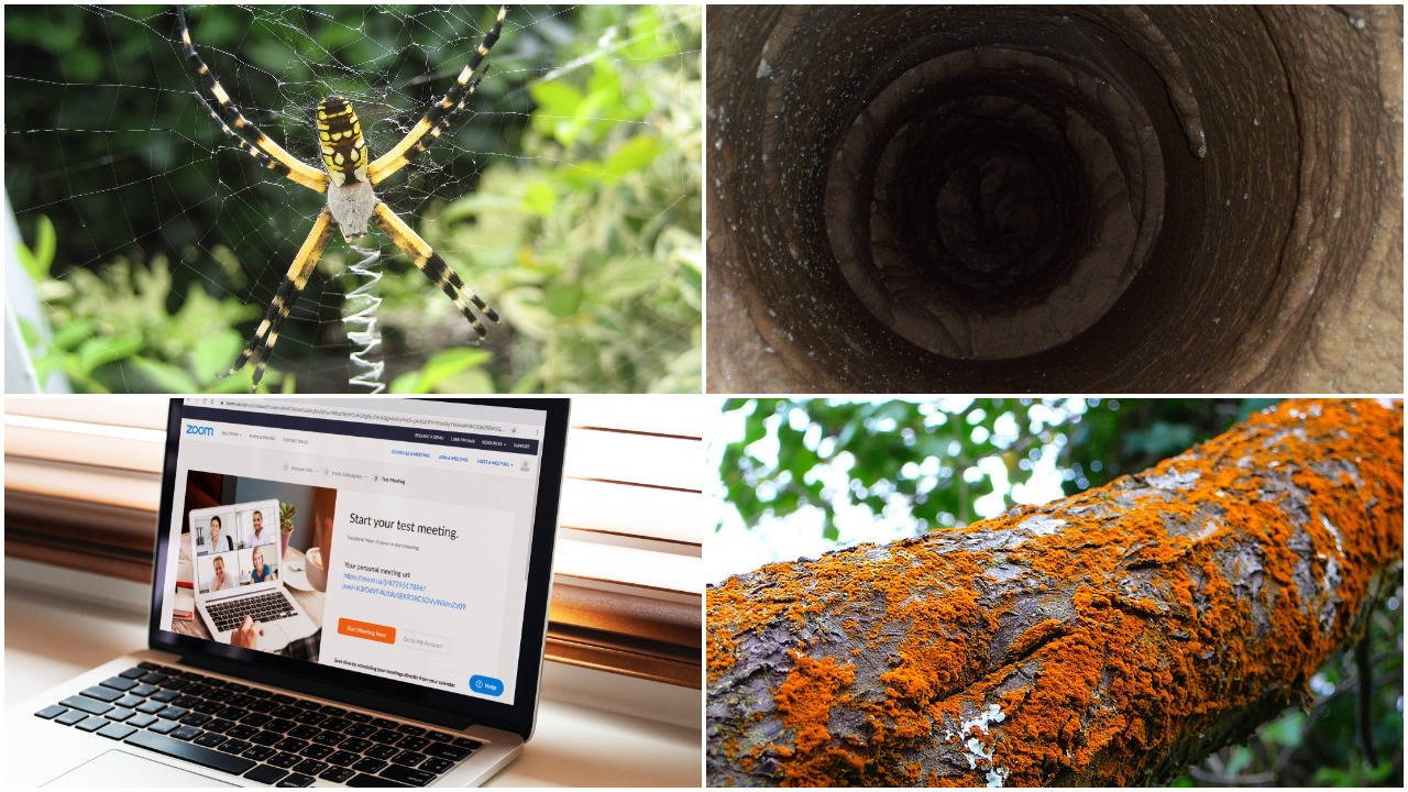 Collage of four photos: spider; lead pipe; laptop screen; orange lichen on tree