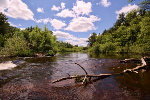 Wolf River on a sunny day with a large stick in foreground and green treeline in background