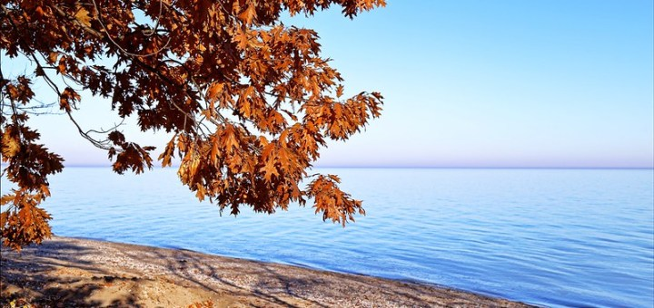 Golden maple leaves by the beach near blue waters of lake.