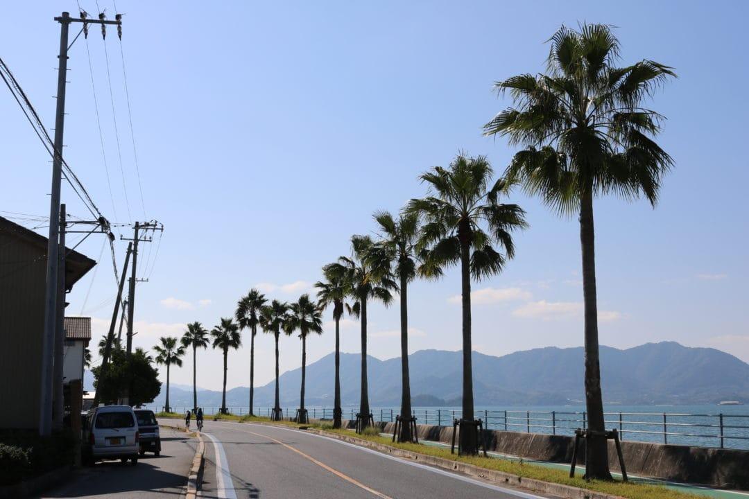 Shimanami Kaido Palm Trees