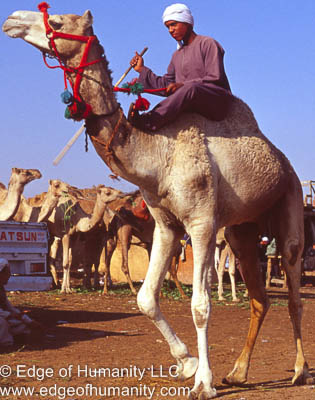 Birqash Camel Market, Egypt.