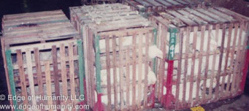 Wood crate full of chickens - Hong Kong.