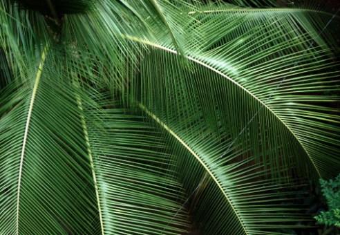 Leaf - India