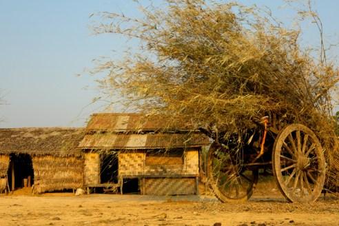 Kyaw Win's Farm