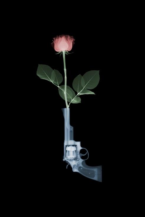 Magnum and Rose