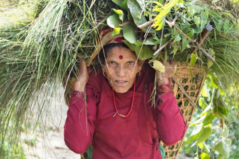 Farmer Chola Kanta Regmi lives and works in the farming community with Dilli Ram Regmi, Sirubari rural Nepal