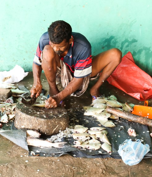 A fish seller preps his produce for the morning market in the fishing town of Mannar (Mannar, Sri Lanka, 2015)
