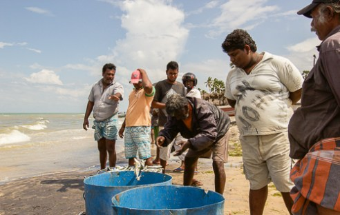 A father shows his son the ropes. The process of unloading the fish is done by 20 men and is over in the blink of an eye with exact precision, minus the odd fish that escapes (Mannar Pier, Sri Lanka, 2015)