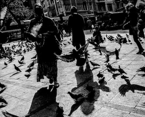 Pigeons flying close to the Blue Mosque.