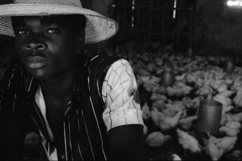 Chicken farm Cap-Haitien, Haiti