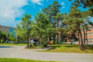 Bellwood Health Services Toronto Addiction Rehab Toronto Facility Trees