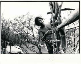Dr. Emmett Aluli works on Kaho olawe hula halau6012-30-30A 8-83