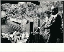 padeken-pig-farm-kahaluu-2654-3-10a-4-28-73