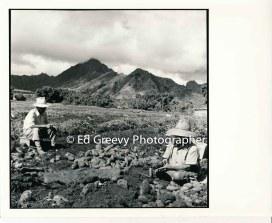 sweet-potato-farmers-in-waiahole-valley-2764-7-3-11-19-74