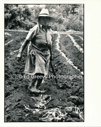 waiahole-farmer-kame-teruya-on-her-valley-farm-2654-3-5a-4-28-73