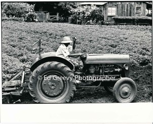 waiahole-farmer-plowing-his-farm-2654-1-15-4-28-73