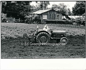 waiahole-farmer-plowing-his-field-2654-1-10-4-28-73