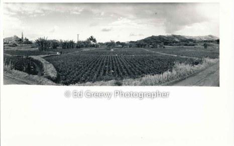 waikane-farm-2626-6-29a-12-30-72