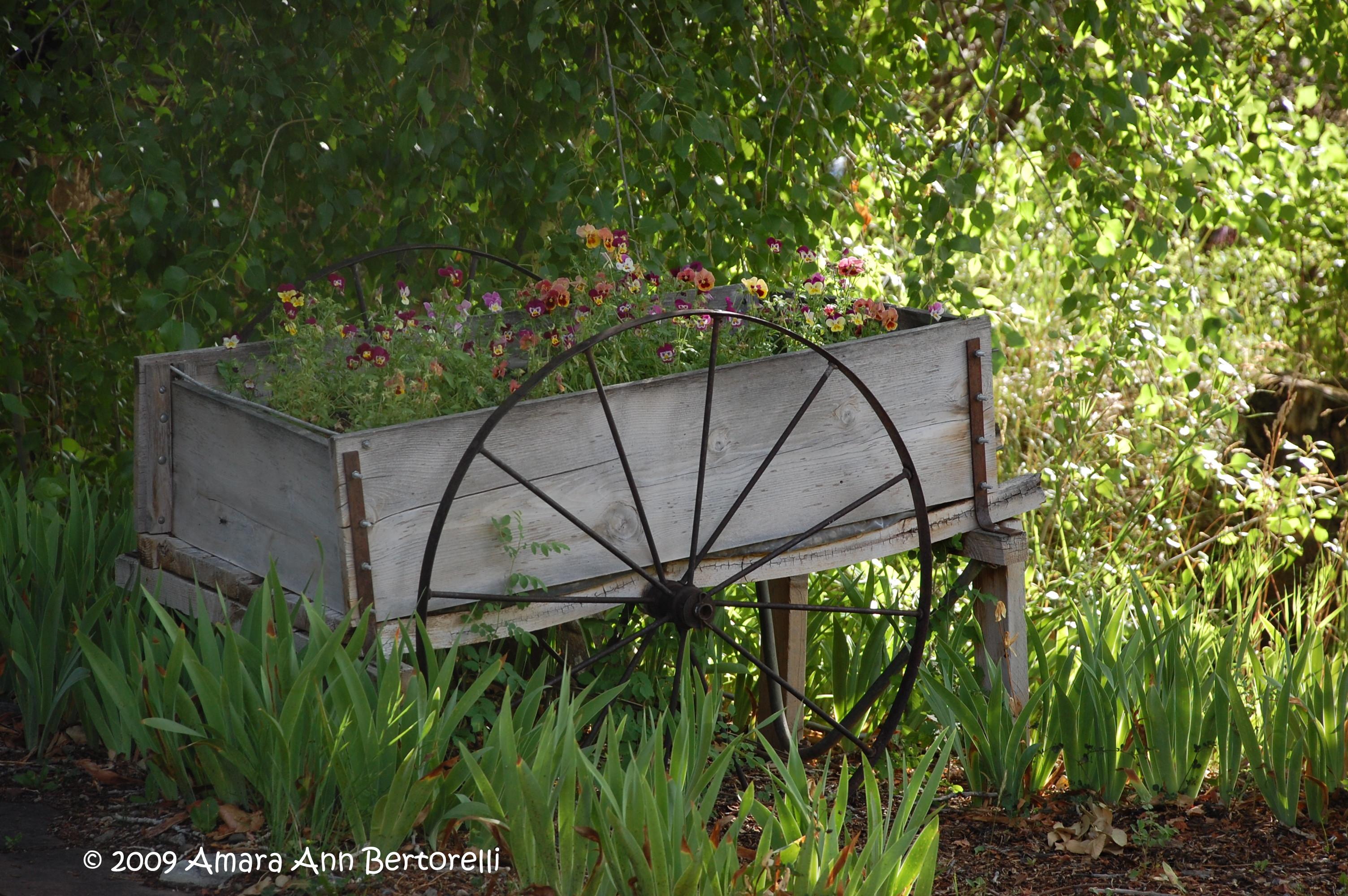 flower cart at mabel, taos nm