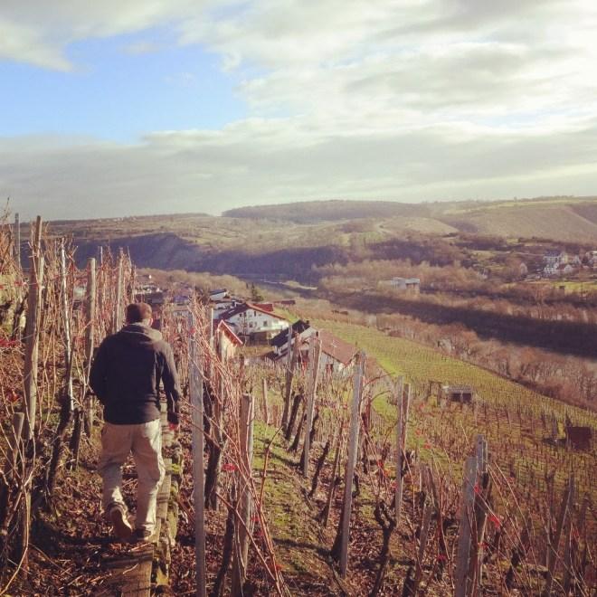 Walking the vineyards