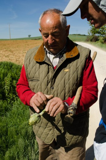 Describing the aphid issues he is experiencing with his artichokes - note the use of a great hand tool!