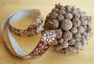 acorncraft2