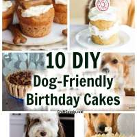10 DIY Safe Dog-Friendly Birthday Cakes