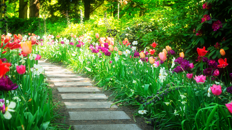 blooming flowers along a path