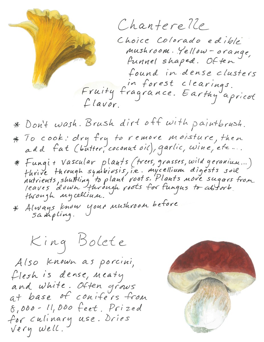Field Guide To Southwest Colorado Mushrooms Edible Southwest Colorado