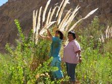 Pequeños agricultores de Tarapacá afectados por presupuesto 2012