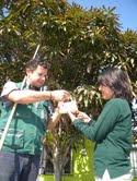 Detectan dos ejemplares de mosca de la fruta en Iquique