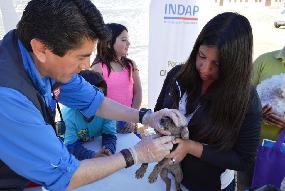 Mascotas reciben atención veterinaria durante operativo   en Chanavayita