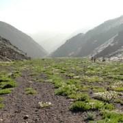 "Insólita floración en la quebrada de La Chimba, Antofagasta: ""Desierto florido"" en trópico de Capricornio"