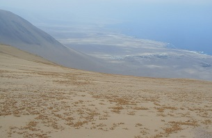 Muerte silenciosa de un ecosistema: imágenes de la agonía de un vergel en el desierto