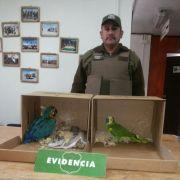 Colchane: Carabineros detuvo a conductor de bus por contrabando de aves